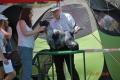 23.07.2016 Międzynarodowa Wystawa w Częstochowie - CWC (CAC), CACIB, Best Dog