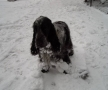 Ze śniegiem zawsze są kłopoty (Snow always means some troubles)