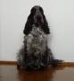 Jego psia mość w całej okazałości (His doggy majesty in all his grandeur)