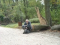 Park w Młochowie. Ślady wichury