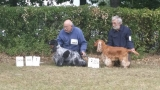 11.07.2015 CACIB i nominacja na Crufts 2016 (CACIB and qualification for Crufts 2016)