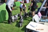 23.07.2016 Międzynarodowa Wystawa w Częstochowie - psie spotkanie towarzyskie
