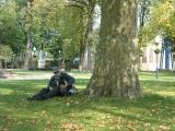 Stary platan w pałacowym parku w Młochowie - pomnik przyrody