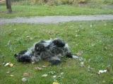 Tarzanie się w trawie bardzo poprawia nastrój. Radzę spróbować