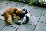 Szczenięce zabawy w Hallein Rif (Puppy plays in Hallein Rif)